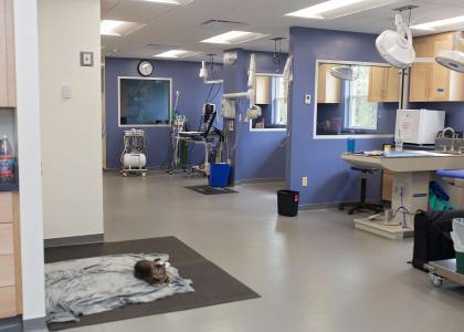 veterinary clinics near me