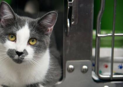 Adopt a senior pet month cats