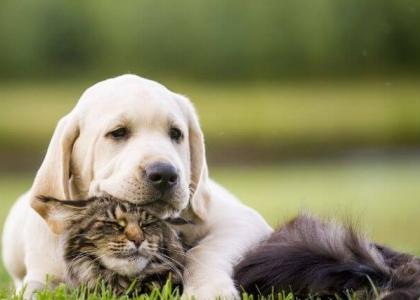 dog and cat flea and tick prevention