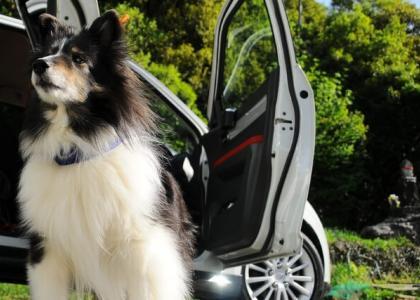 Dog sitting outside of a car