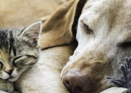 dogs and cats euthanasia