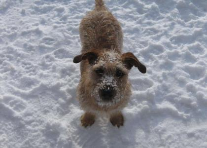 winter, dog, snow
