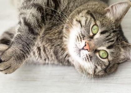 keeping indoor cats happy and healthy