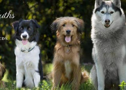 Different breed dogs together