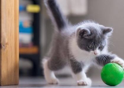 checklist for new kittens