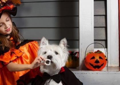 beware of chocolate poisoning this Halloween
