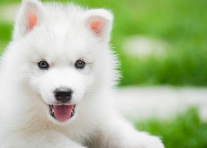 puppy dental care