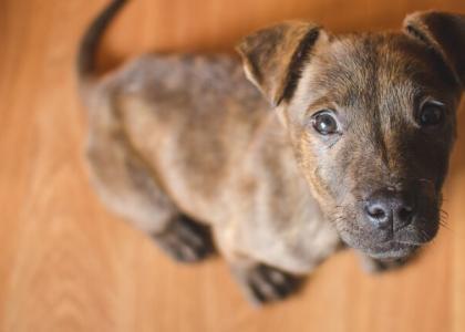 Puppy looking upward