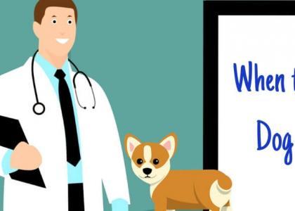 Illustration of dog at veterinarian appointmet