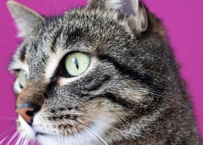 What is Feline Immunodeficiency Virus (FIV)?